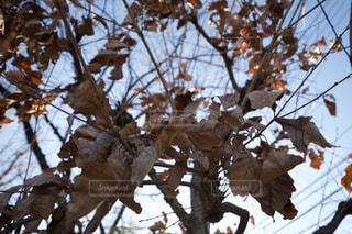 雪に覆われた木の写真・画像素材[970418]