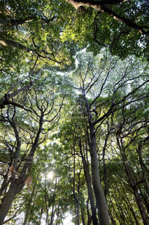 近くの木のアップの写真・画像素材[970420]