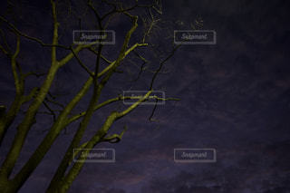 近くの木のアップの写真・画像素材[970447]