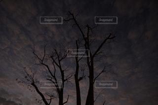夜明けの写真・画像素材[970448]