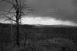 フィールドの真ん中の木の写真・画像素材[970606]