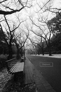 ツリーの横にある空の公園ベンチの写真・画像素材[971481]