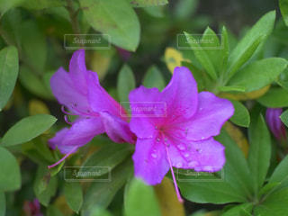 近くの花のアップの写真・画像素材[1136967]