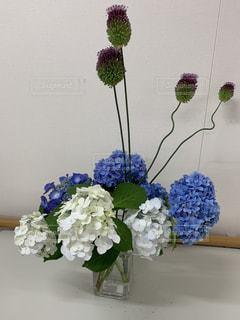 白と青の紫陽花とアリウム丹頂のアレンジメントの写真・画像素材[3323593]