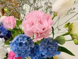ピンクと青のコントラストが涼しげの写真・画像素材[3333113]