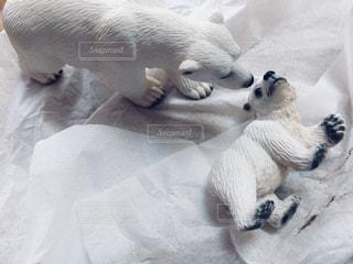 シロクマの親子の写真・画像素材[1007607]