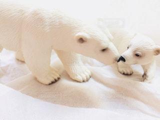 シロクマのキスの写真・画像素材[1007609]