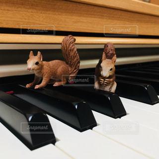 ピアノとリスの写真・画像素材[1007611]