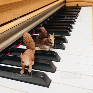 ピアノとリスの写真・画像素材[1007613]