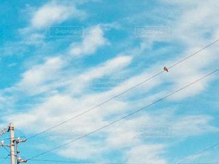 電線に鳩の写真・画像素材[1010148]