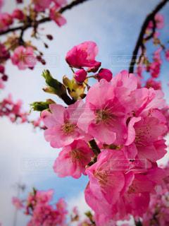 春がきたの写真・画像素材[1046577]