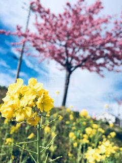 黄色の花の写真・画像素材[1048003]