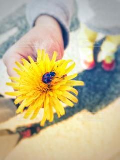 春のともだちの写真・画像素材[1051590]