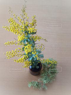 はるの花 - No.1057817