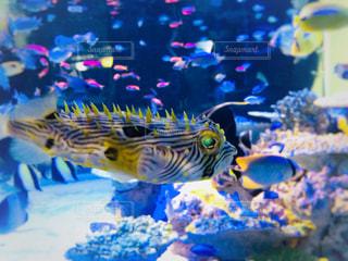 水の中の魚の群れの写真・画像素材[1064275]