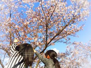 青空と桜の写真・画像素材[1101733]