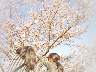 春に届け!の写真・画像素材[1104490]