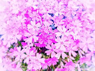 花だらけの写真・画像素材[1110279]