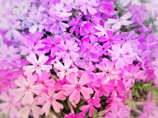 賑やかな花たち - No.1110284