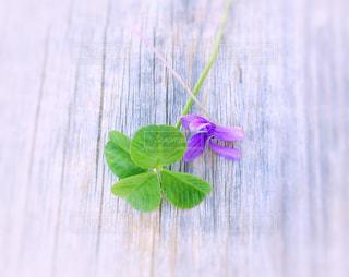四つ葉とお花の写真・画像素材[1133446]