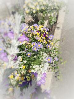 賑やかな花壇の写真・画像素材[1140573]