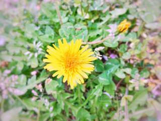 黄色の花の写真・画像素材[1146645]