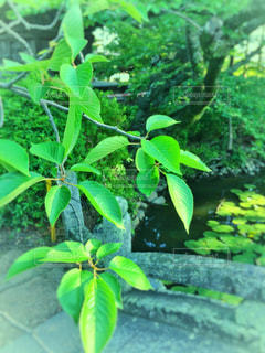 夏の風景の写真・画像素材[1193084]