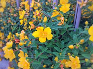 夏色の花の写真・画像素材[1193727]