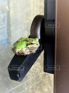 カエル見つけたの写真・画像素材[1202015]
