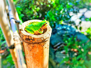 カエルくんの写真・画像素材[1249021]