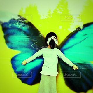 蝶の壁の写真・画像素材[1530643]