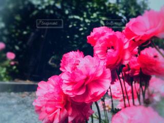 鮮やかな花の写真・画像素材[2056697]