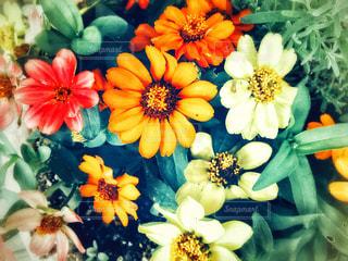 花のクローズアップの写真・画像素材[2171208]