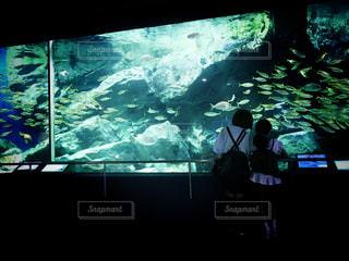 水族館へおでかけの写真・画像素材[2272846]