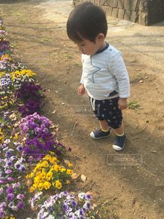 公園の花の側に立っている小さな男の子ゆうきボーイ。の写真・画像素材[2223828]