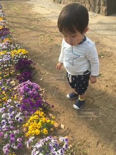 公園の花の傍らに立って見つめる小さな男の子ゆうきボーイ。の写真・画像素材[2223829]
