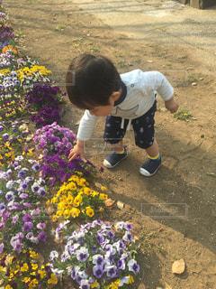 公園で花を見つけて触ろうとする少年ゆうきボーイ。の写真・画像素材[2223830]