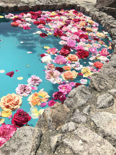 水面に浮かぶの写真・画像素材[971511]