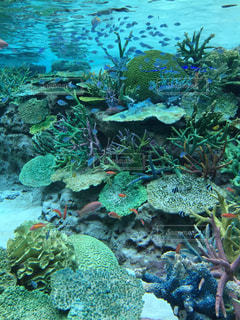 水族館のサンゴ礁の写真・画像素材[971379]