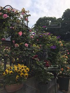 花のある庭の写真・画像素材[1012753]