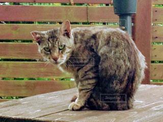 雨宿りする猫の写真・画像素材[1092952]