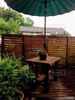 雨宿りする猫の写真・画像素材[1092953]