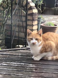 午後の猫の写真・画像素材[1625768]