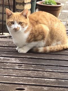 午後の猫の写真・画像素材[1625769]