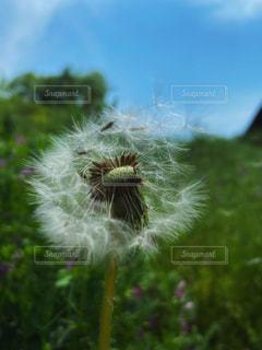 風に舞うの写真・画像素材[3157737]