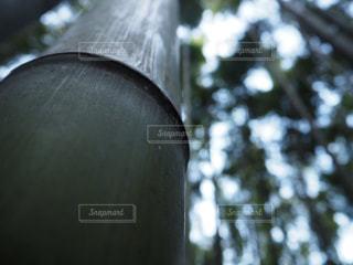 竹林の写真・画像素材[972141]