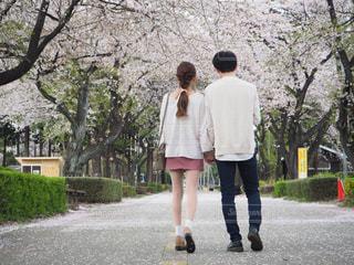 桜並木をお散歩の写真・画像素材[2046446]