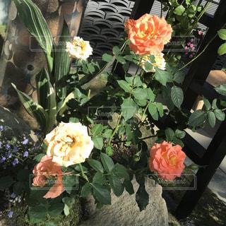 花の写真・画像素材[1579063]