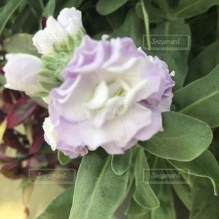 花の写真・画像素材[1579066]