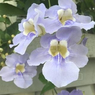 花の写真・画像素材[1579067]